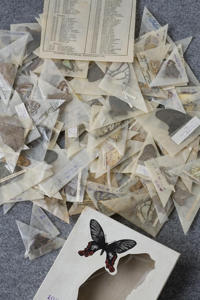 古い蝶と蛾の標本-02