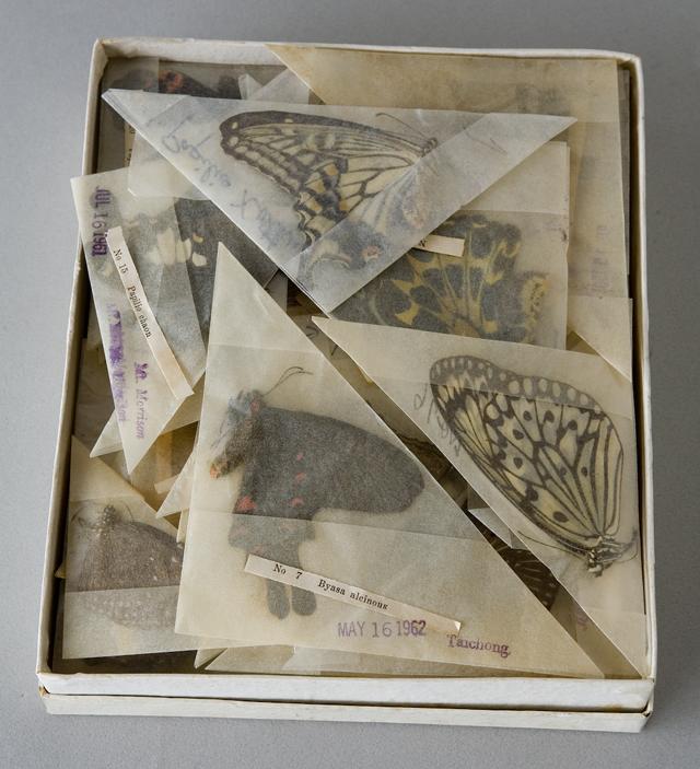 古い蝶と蛾の標本-04