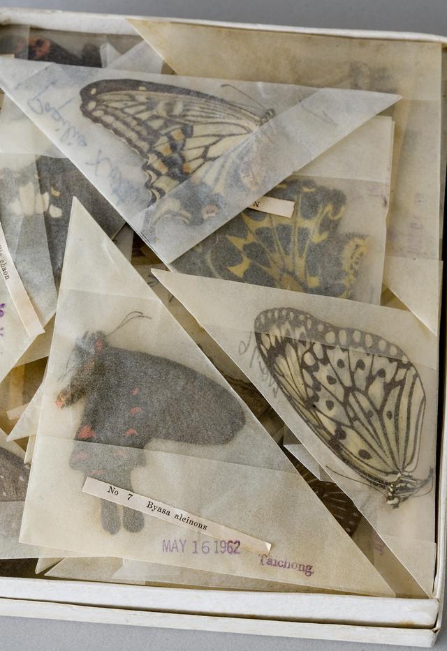 古い蝶と蛾の標本-05