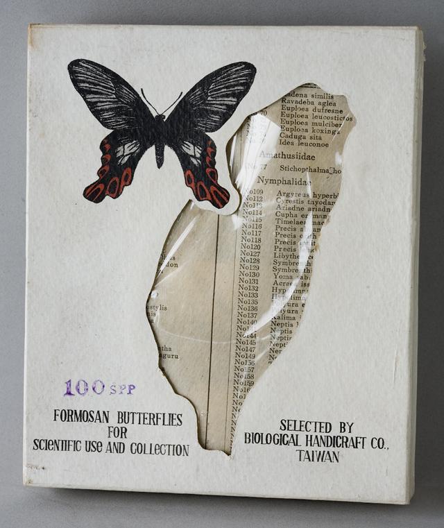 古い蝶と蛾の標本-07