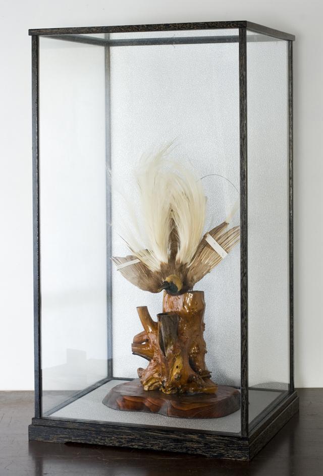 極楽鳥の剥製-01