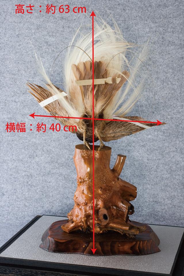 極楽鳥の剥製-09a